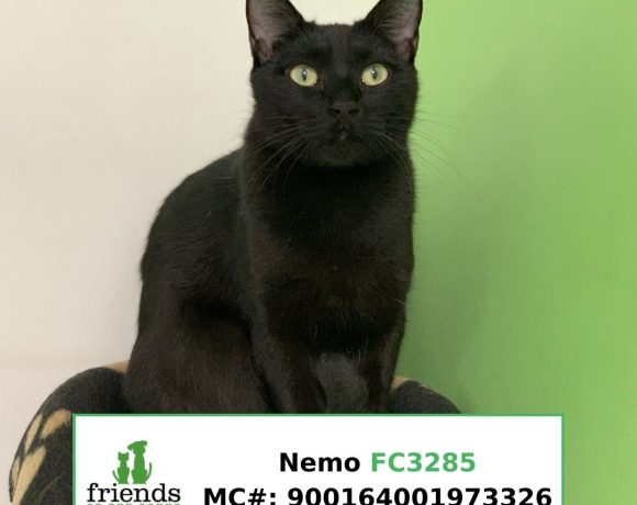 Nemo (Adopted)