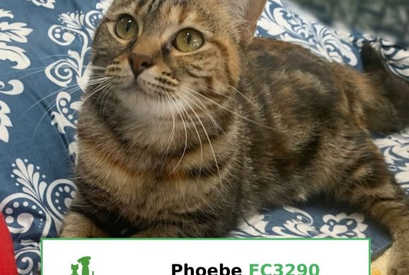 Phoebe (Adopted)