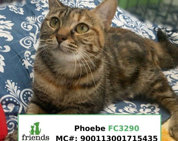 Phoebe (Adopted)