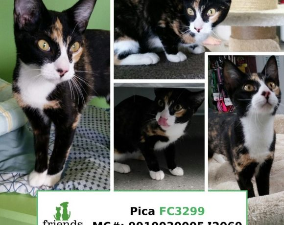 Pica (Adopted)
