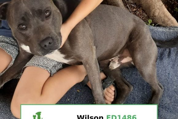 Wilson (Adopted)