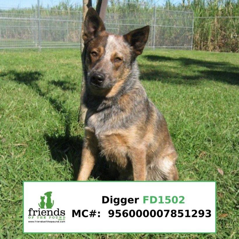 Digger (Adopted)