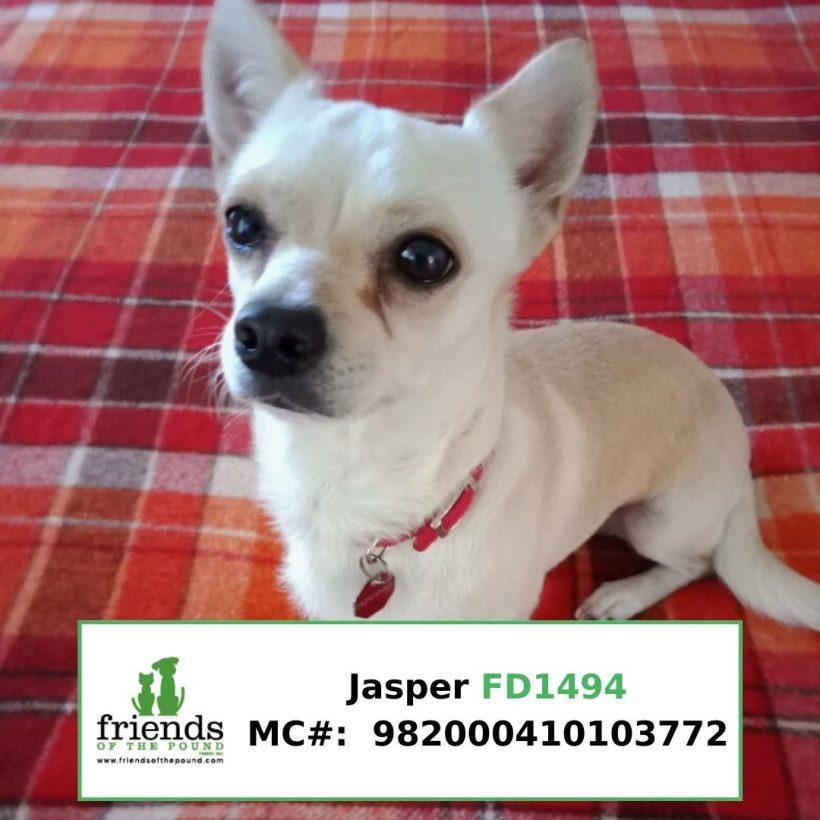 Jasper (Adopted)