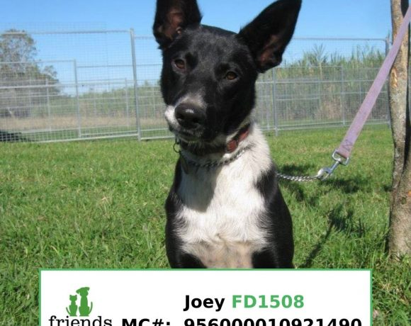 Joey (Adopted)