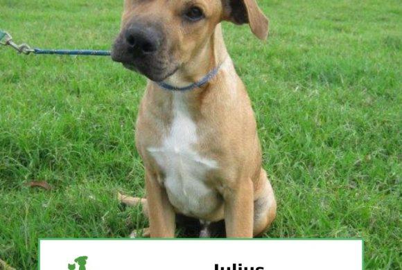 Julius (Adopted)