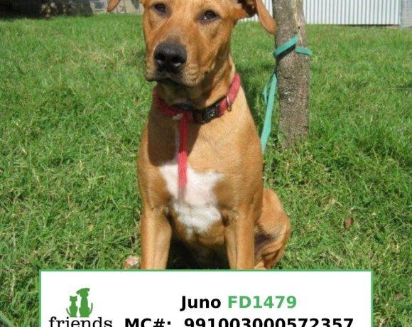 Juno (Adopted)