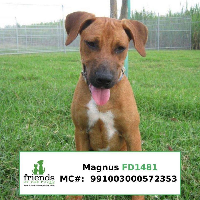 Magnus (Adopted)