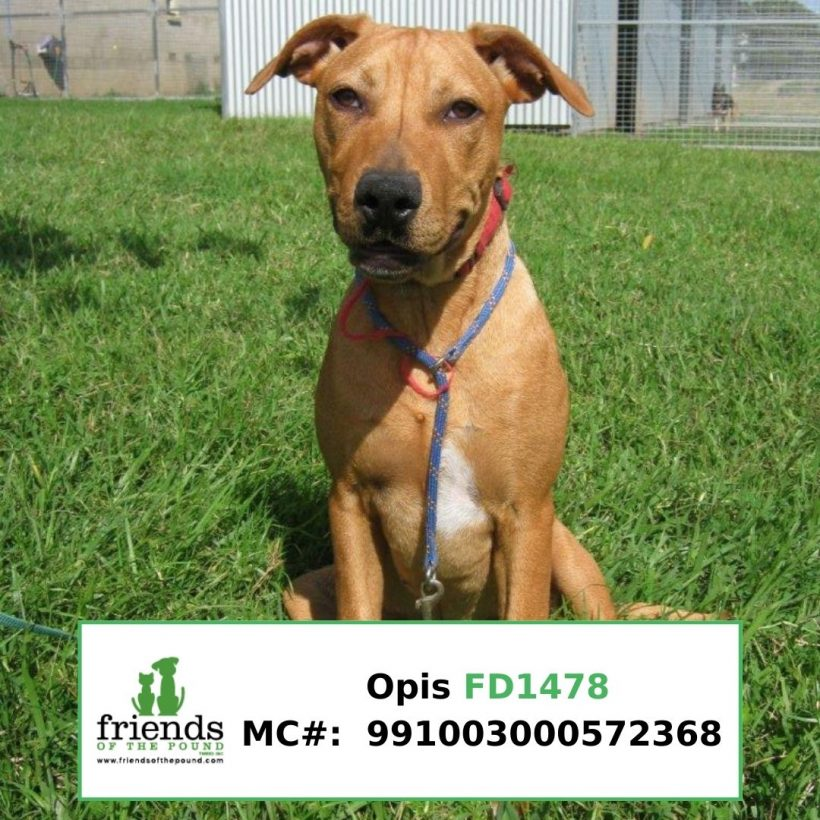 Opis (Adopted)