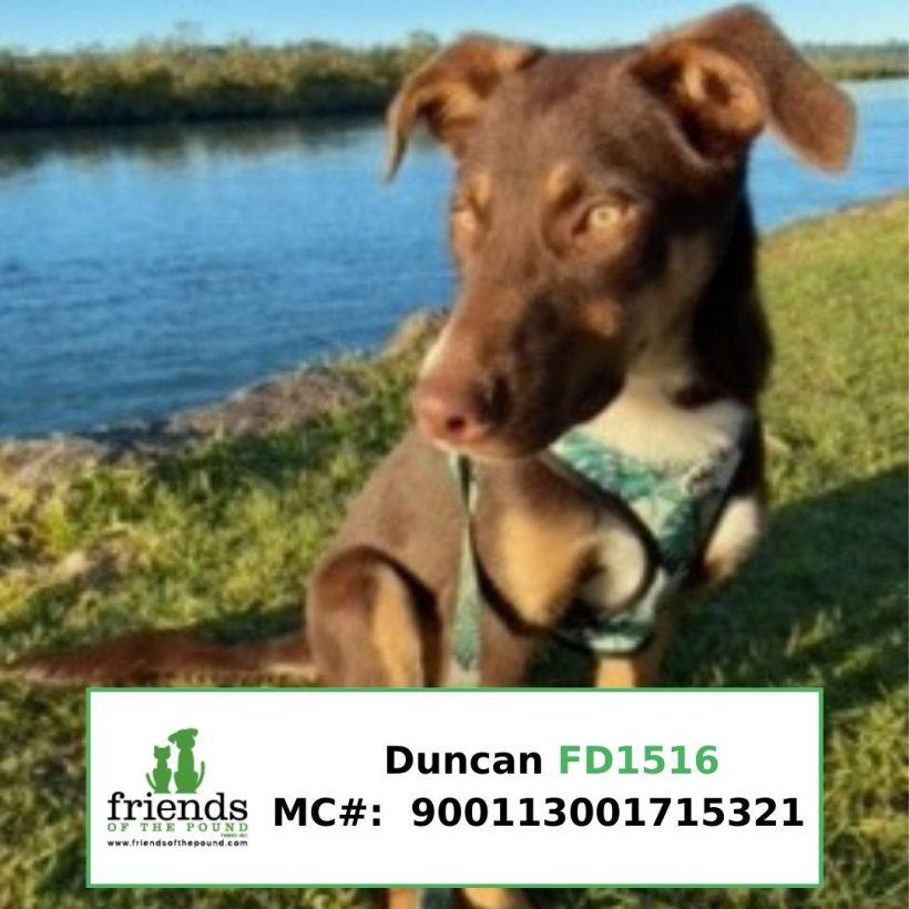 Duncan (Adopted)