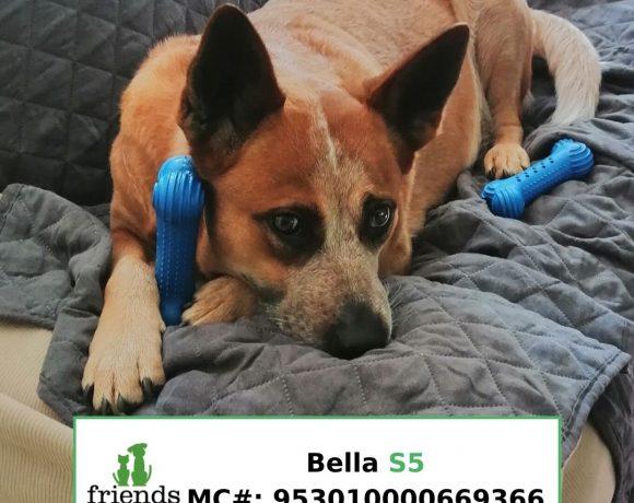 Bella (Adopted)