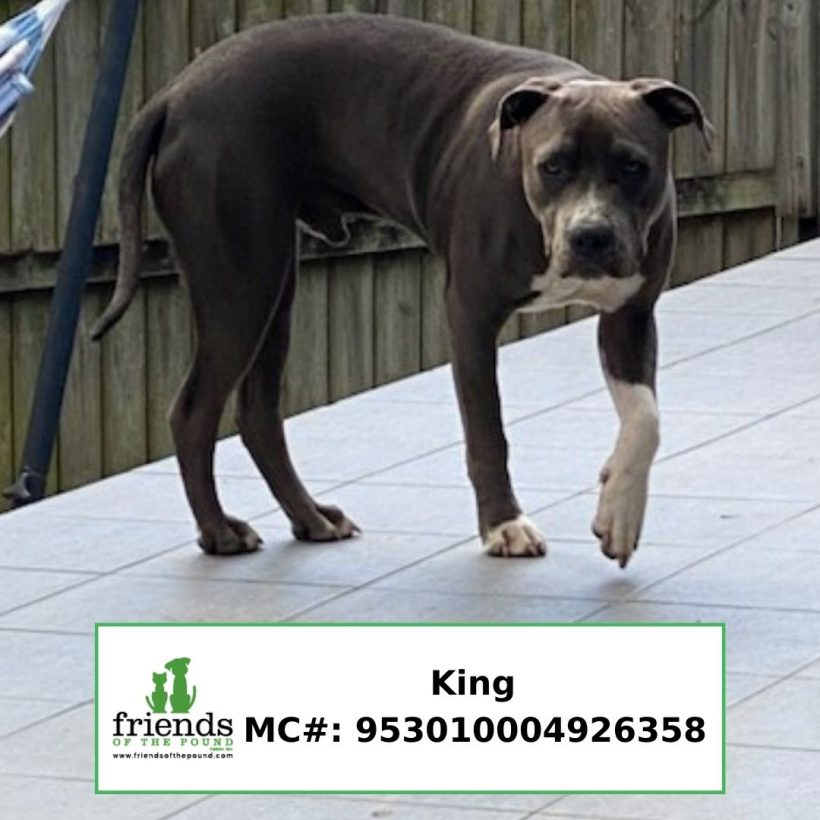 King (Adopted)