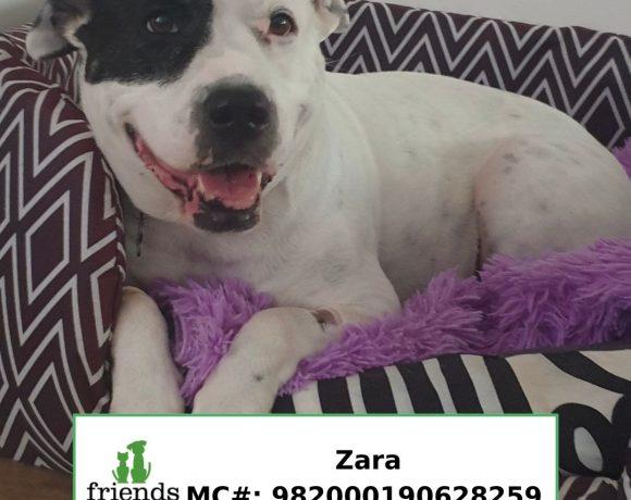 Zara (Adopted)