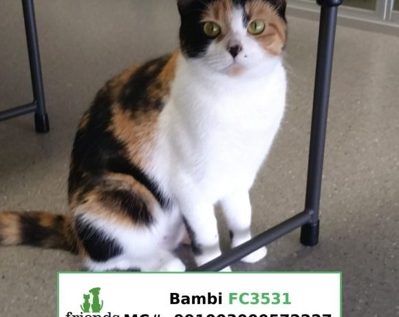 Bambi (Adopted)