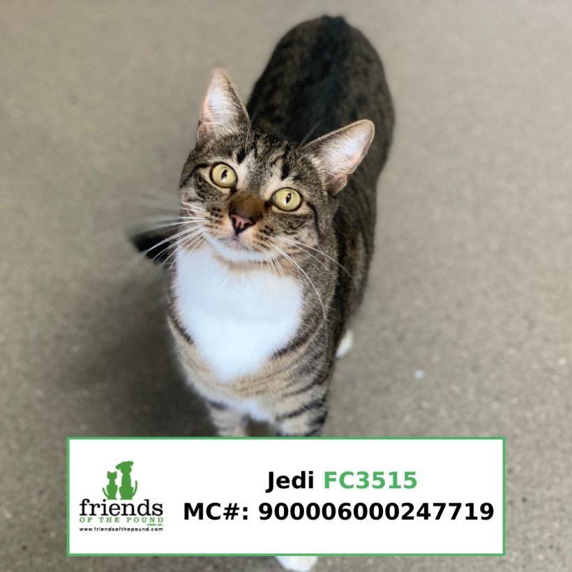 Jedi (Adopted)