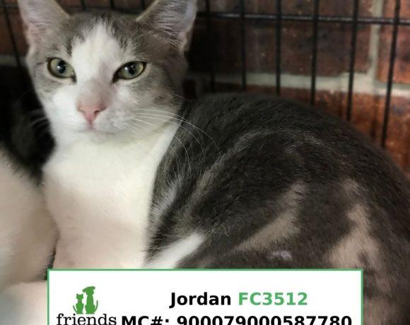 Jordan (Adopted)