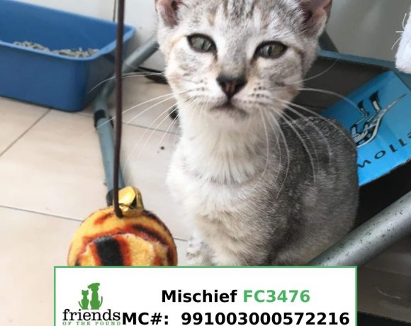 Mischief (Adopted)