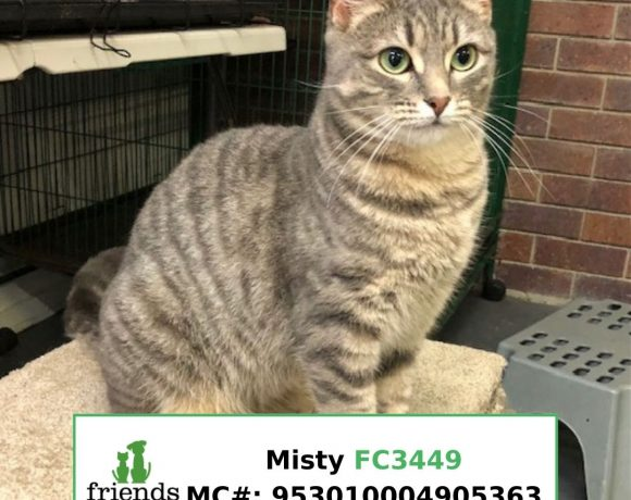 Misty (Adopted)