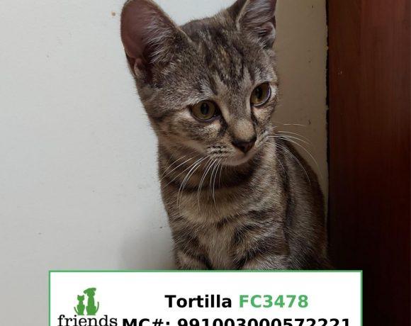 Tortilla (aka Tootles) (Adopted)
