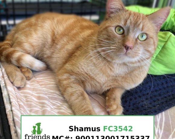 Shamus (Adopted)