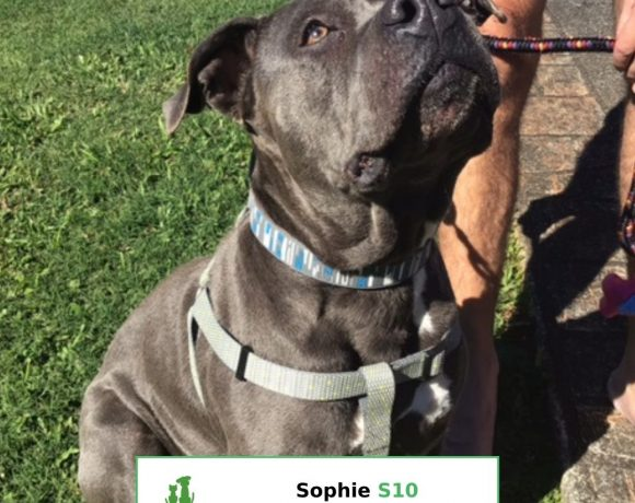 Sophie (Adopted)
